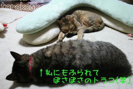 IMG_3253コムギ4