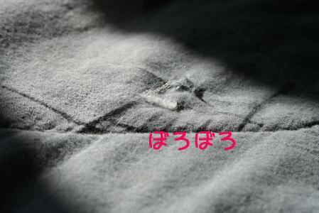 IMG_3458きじ4
