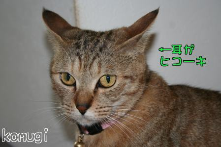 IMG_4591コムギ5