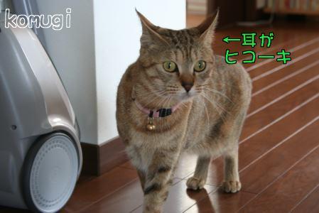 IMG_4587コムギ3