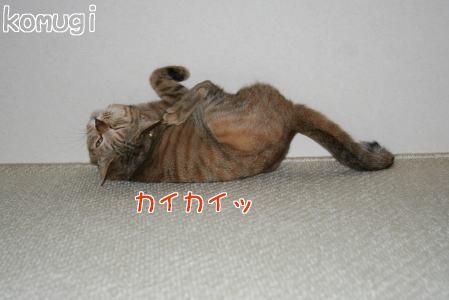 IMG_4657コムギ2