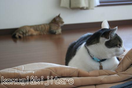 IMG_4815きじ1