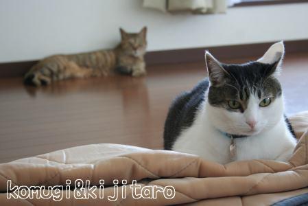 IMG_4818きじ4