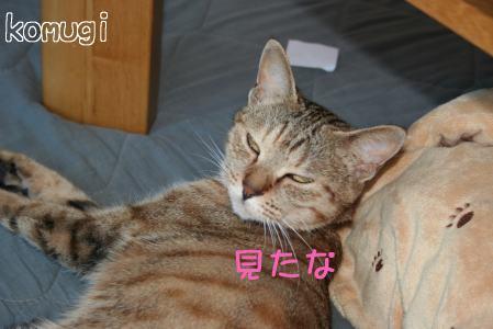IMG_5248コムギ6