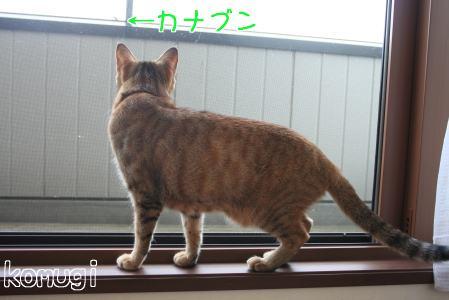 IMG_5371コムギ1