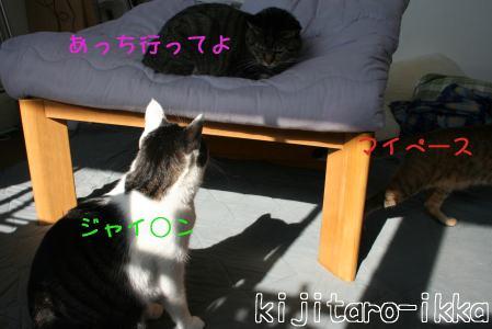 IMG_7835トラコ8