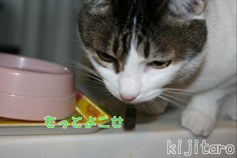 IMG_7890きじ6
