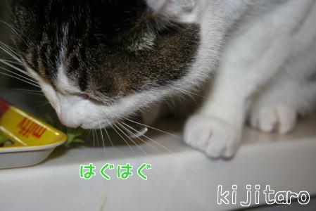 IMG_7884きじ4