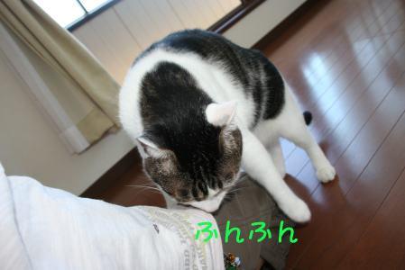 IMG_0564kiji2.jpg