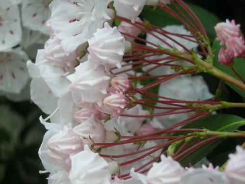 鞘で雄しべを待たせる花2