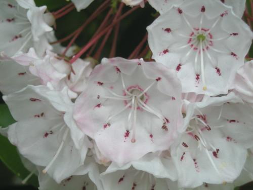 鞘で雄しべを待たせる花1