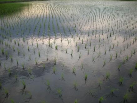 田 大地に植える