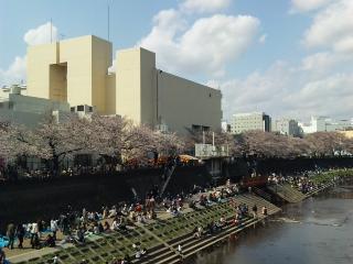 柏尾川2010年1
