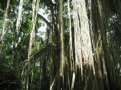 モンキーフォレストの木