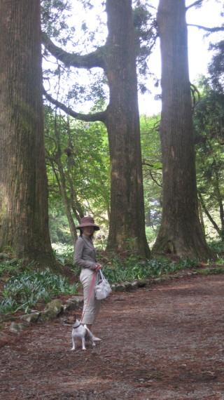 杉とお姉さんトララ