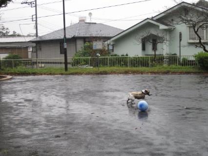 雨に中ボール3