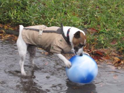 雨の中ボール