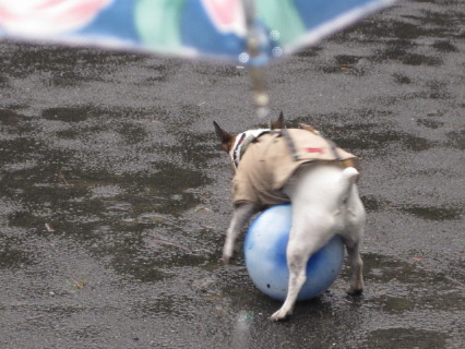 雨の中ボール1
