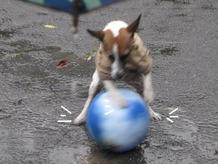 雨の中ボール2