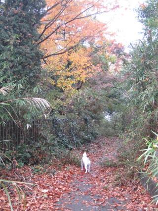 雨上がりの裏山紅葉