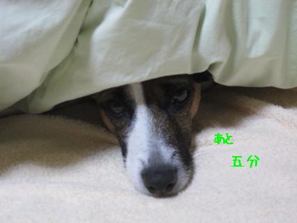 寝ぼスケ2