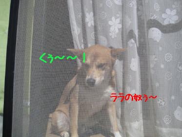 こうちゃん1_1
