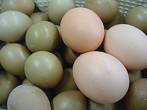 (左)雉の卵(右)鶏の卵