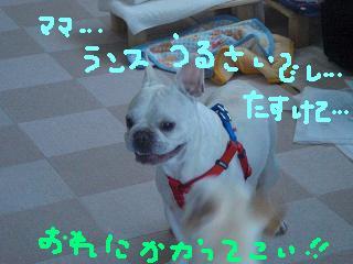 CIMG0015.jpg