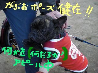 CIMG0183.jpg