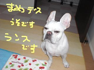 CIMG4495_convert_20081120184006.jpg