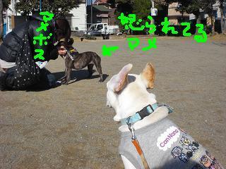 CIMG5761_convert_20090211221037.jpg