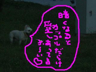 CIMG7862.jpg
