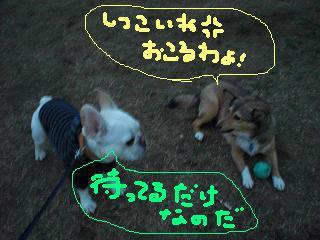 CIMG9458.jpg