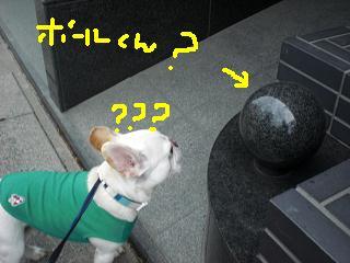 CIMG9488.jpg