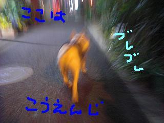 CIMG9909.jpg