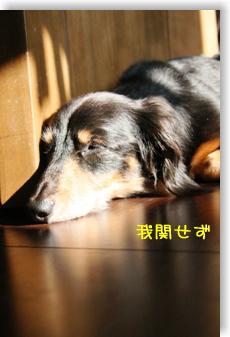 20091029-01.jpg