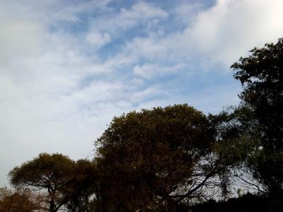 11_20111114221215.jpg