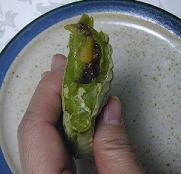 抹茶タイヤキ2