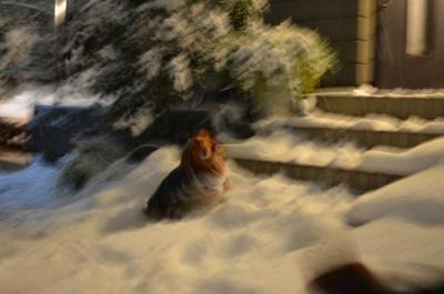 snow2_20110118200220.jpg