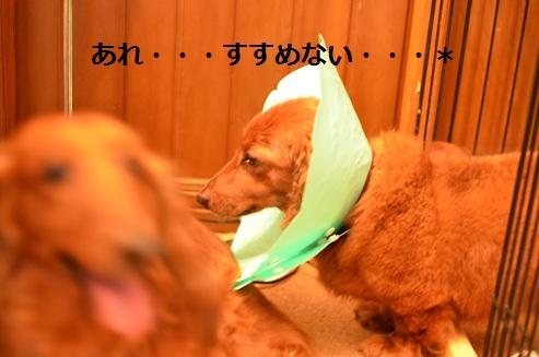 t3_20110625123859.jpg
