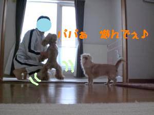 パパと遊ぼう1