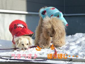 雪を食らう子達