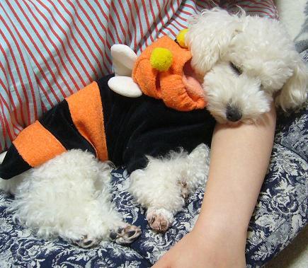 腕枕で寝る犬