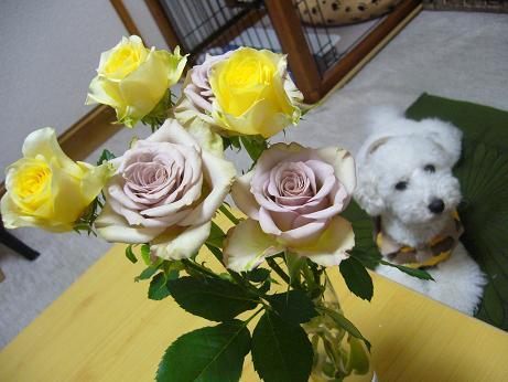 ぼきゅと薔薇