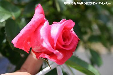 2010/05/09 その3