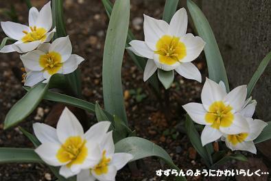 2010/03/20 その5