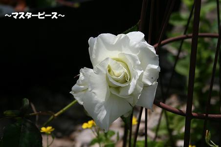 2010/05/21 その6