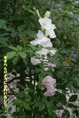 2009/07/12 その1