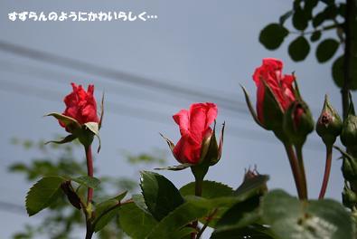 2010/05/09 その2