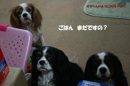 2010/06/11 その4
